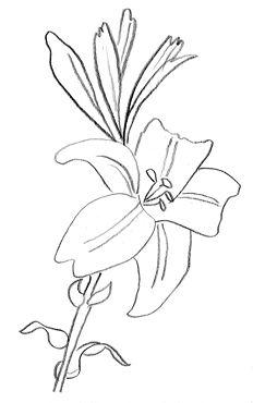 Fleur De Lys Dessin Gratuit