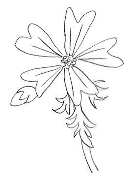 dessin gratuit dun œillet, la fleur de mauve