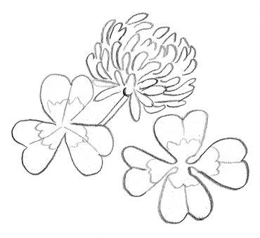 comment dessiner des fleurs de marguerites, dessin de trèfle gratuit
