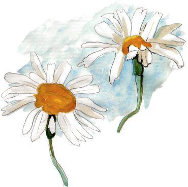2 Marguerites Images Gratuites