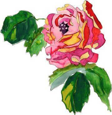 illustration de rose peinte à l'aquarelle