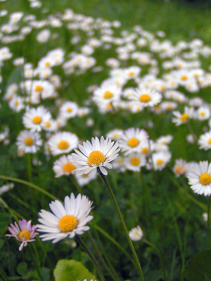 Photos De Fleurs Gratuites
